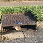 Storm Drains at 959 11TH ST