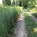 Tall Grass/Weeds at 335 OLD GRIST MILL LN